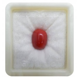 Certified Red Coral Sup-Premium 10+ 6ct